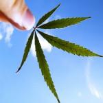 cannabis_sky-1
