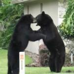 2-osos-longwood-florida