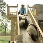 osos-panda-en-tobogan