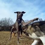 perros-en-camara-lenta-gopro