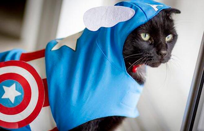 gato-heroe-2014