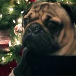 nolapeles-feliz-navidad-2014