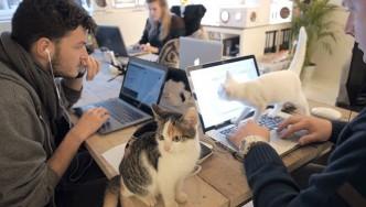 oficinas-poopy-cat