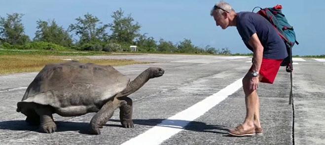tortuga-galapago-molesta-2015