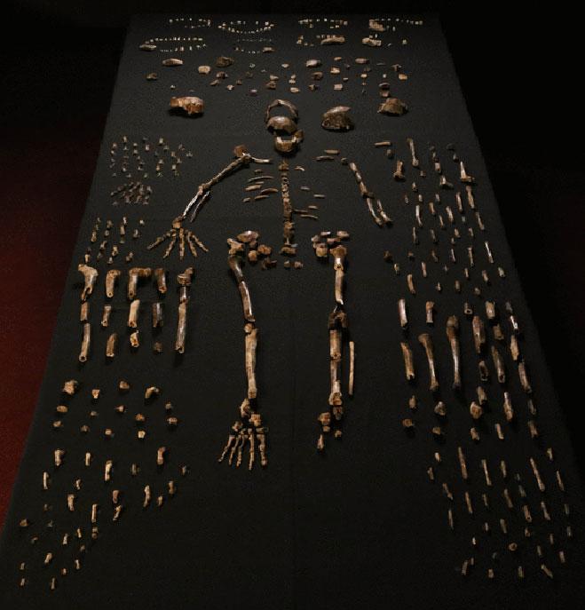 homo-naledi-huesos
