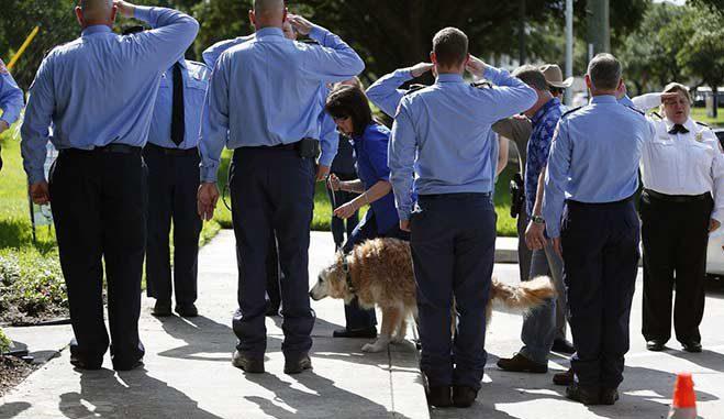 bretagne-2016-heroe-canina-ultima-caminata